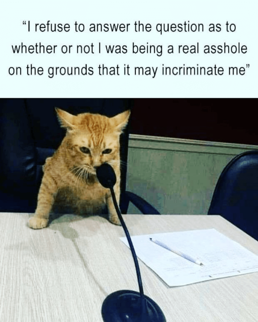 Court Cat meme Cats are mischievous, but they know how to cover their tracks. Now if they could only bury their #2 in the litter box. That would be great.
