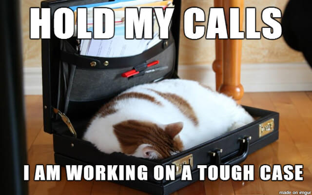 Lawyer Meme This cat is obviously very tired from working on a tough case.
