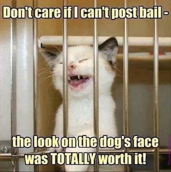 Category: Criminal Kitten in jail meme  Look, I love cats. And internet cats are all the rage. Especially when it comes to memes. But internet cats need to stop abusing the internet dogs of the world. I don't appreciate it.